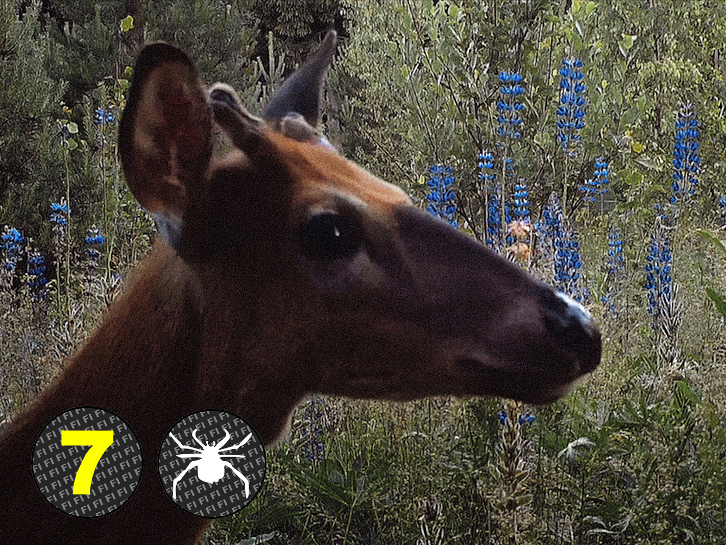 Milja Viita: Eläinsilta U